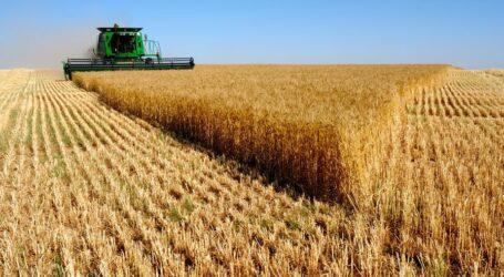 العراق يحصد 500 ألف طن من القمح المحلي في بداية الموسم