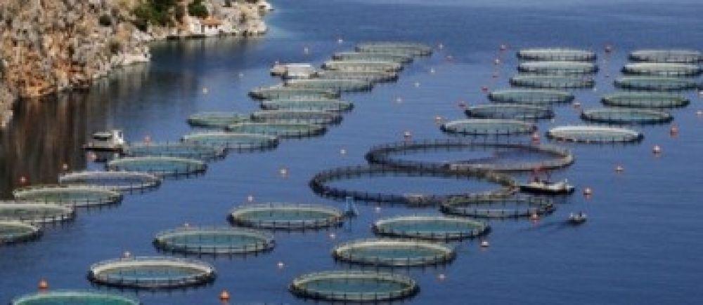 elevage-poisson-pisciculture