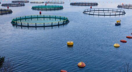 استثمارات بقيمة 75 مليار دج في الصيد البحري و تربية المائيات