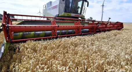 نتائج إمتياز في الإنتاج الفلاحي لشعبة الحبوب