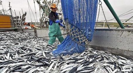 تنظيم جديد في تسويق منتجات الصيد البحري